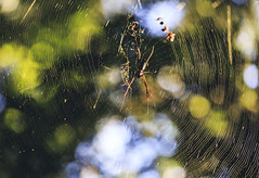 In the trap. (Pablin79) Tags: spiderweb defocused blast cobweb luminescence dewy disco fantastic effect glow stick blurred motion spider colors light sunrise bokeh outdoors lines shine cuñapirulodge aristobulodelvalle misiones argentina closeup macro forest wood