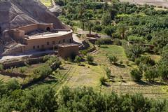 Green Fields (Darren Poun) Tags: aïtbenhaddou ouarzazate morocco africa arabic arab ksar kasbah berber village fields landscape oasis traveling nikon d800 d800e nikkor105mm f14 desert