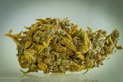 No Drugs ! No THC Only CBD 100% Legal (harakis picture) Tags: cbd cannabis flower sony a7 macro pleasure