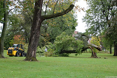 One fewer tree in Delaware Park (Can Pac Swire) Tags: buffalo newyork state usa us america american unitedstates delawarepark storm hurricane damage tree downed fell 2017aimg3859 meadowdrive see nice shot swire