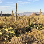 Tucson, AZ thumbnail