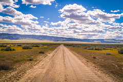 Dirt Country Road Scenic Drive! California Wildflowers Superbloom Carrizo Plains National Monument! God Spilled the Paint Desert Wildflowers Super Bloom! Temblor Range! Elliot McGucken Fine Art Landscape & Nature Photography! Spring Flowers Superbloom! (45SURF Hero's Odyssey Mythology Landscapes & Godde) Tags: sony a7rii fe 24240mm f3563 oss lens sel24240 california spring wildflowers superbloom carrizo plains national monument god spilled paint desert super bloom temblor range elliot mcgucken fine art landscape nature photography wildflower