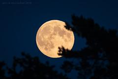 Bark at the Moon (ianrwmccracken) Tags: night d750 nikon tree sigma150600mm silhouette satellite telephoto lowlight sky moon scotland bark