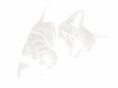 Cat  Nap (Whatknot) Tags: 2006 catnap junior whatknot cat 0xfdfaf2 p306 protectedbydbb1