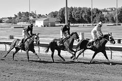 "Rillito Park Racetrack (Andrew ""MuseumAndy"" Boehly) Tags: rillito park racetrack rillitoparkracetrack rillitopark rillitoracetrack horseracing horse tucson arizona oldpueblo southernarizona"