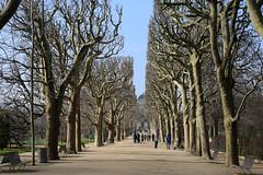 Paris (zmotoly) Tags: paris france february février jardin des plantes