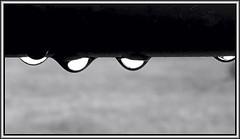 Droplets (Bob R.L. Evans) Tags: waterdrops composition graytones raindrops unusual horizontal curves blackandwhite weather spring