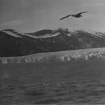 View from the Taku Glacier cruise, Alaska / Vue, croisière du glacier Taku (Alaska) thumbnail
