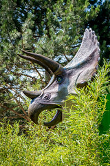 Triceratops (Thierry GASSELIN) Tags: d7100 dinosaure dinosaur