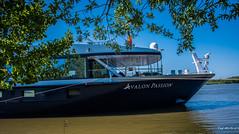 2018 - Romania - Danube Delta - Sfantu Ghoerghe - Avalon Passion (Ted's photos - For Me & You) Tags: 2018 avalonwaterways cropped nikon nikond750 nikonfx romania tedmcgrath tedsphotos vignetting sfantughoerghe sfantughoergheromania avalon avalonpassion boat ship danuberiver danube danubedelta prow shipprow flag romanianflag