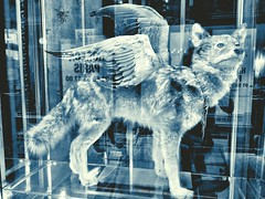 Angel Coyote (Heather Valey) Tags: blackandwhite paris taxidermy coyote angelcoyote