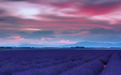 Dreaming Of A Purple Mood (R42) (Darblanc ( http://darblanc.com )) Tags: canoneos7d countryside hills mountains nature darblanc darblancphotography photography xavdarblanc xavdarblancphotography photo coloursshapesandmoods spring colour series daytime bluehour sunrise artphoto longexposure panorama clear clouds mist fog landscape lavender flowers france frenchalps provence alpesdehauteprovence valensole plateaudevalensole