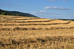 Quand les blés sont coupés (Excalibur67) Tags: nikon d750 sigma globalvision 24105f4dgoshsma paysage landscape nature nuages sky ciel cloud moissons campagne champs