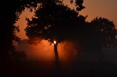 Good Morning Sunshine | Friday 13 th (Frank Berbers) Tags: ochtendmist morgennebel morningfog brumematinale zonsopkomst mist fog brouillard nebel neerkant noordbrabant grootepeel nationalparkdegrootepeel nationaalparkdegrootepeel parcnationaldegrootepeel sonnenaufgang leverdusoleil sunrise schemering twilight zwielicht morgendämmerung daybreak nikond5100 landschap landscape landschaft paysage