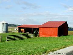 Barnyard (Picsnapper1212) Tags: barnyard farm barn agriculture scene adamscounty ohio october 2007