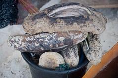 DSC_0114 (yakovina) Tags: silverseaexpeditions indonesia papua new guinea island auri islands