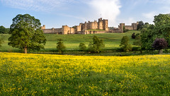 Alnwick Castle Panorama. (Johnners61) Tags: almwickcastle alwick castle riveraln river northumberland aln evening dusk twilight golden goldenhour peace peaceful idyllic monument historic medieval olympuspen olympus pen ep5 microfourthirds micro four thirds m43 mft framed buttercups meadow calm pano panorama landscape britain england uk