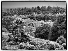 "Op weg naar het nationale park ""Hoge Veluwe"" (alterahorn) Tags: nederland reisezoom olympusomdem1ii olympusmzuiko12100mm olympusmzuiko olympus sw nb noireetblanc bw blackandwhite landschaft nationalpark gelderland achterhoek niederlande hogeveluwe veluwezoom"