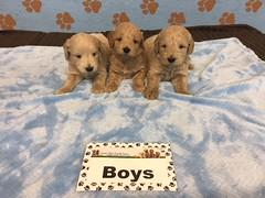 Roxie Boys pic 3 6-17