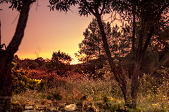 sunset (Moha.Sf) Tags: sunset paisaje atardecer tarde landsacape natura jardin arboles tree naturaleza puesta de sol colores beautiful