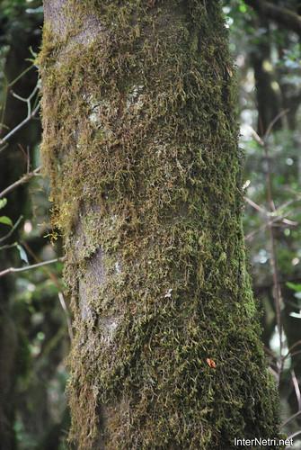 Національний парк Гарахонай, Гомера, Канарські острови  InterNetri  0698