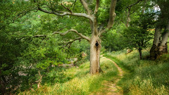 Leaves of summer green. (Einir Wyn Leigh) Tags: leaves summer july wales path foliage tree lines walking pleasure outdoor light sunlight green