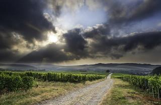 Sunrise in the vineyard {Explore}