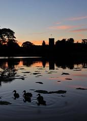 Evening Paddle (Explored) (eMAJgen) Tags: ducks lake sunset reflections melbourne derbyshire uk silhouette