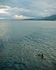 DSC_0294 (yakovina) Tags: papuanewguinea alotau silversiaexpeditions