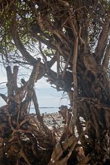 DSC_0128 (yakovina) Tags: silverseaexpeditions indonesia papua new guinea island auri islands
