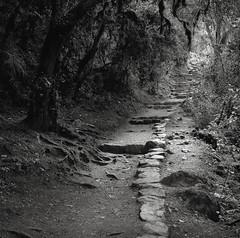 Along the Inca Trail, Peru (austin granger) Tags: incatrail peru jungle path stone time evidence square film trek hike gf670