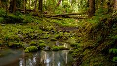 Small Mossy Creek (rich trinter photos) Tags: ipsutcreekcampgrounds mountrainier ashford washington unitedstates us landscape northwest moss mossyrocks trinterphotos richtrinter