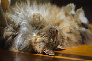 fun in the sun - cat style!