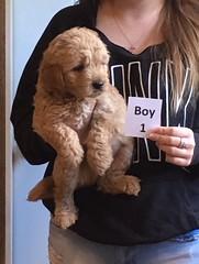 Lucy Lu Boy 1 6-17