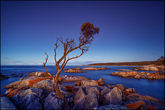 Bay of Fires I - Prelude (niggyl (well behind)) Tags: binalongbay bayoffires eastcoasttasmania sthelens allocasuarinaverticillata sheoak devoniangranite lichen oxide sonyilce7rm2 sony sonya7rii sonyalpha7 a7rii a7riisony zeiss zeissbatis1828 zeisslens batis zeissemount breakthroughfilters breakthroughphotography breakthroughx4 longexposure seascape ndfilter breakthroughphotographyx410stopndfilter