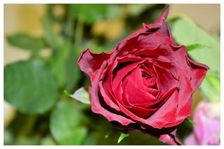 Bloom..