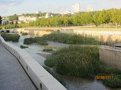 Regeneration of a river, Madrid Rio:  the regeneration of the Manzanares! (d.kevan) Tags: madrid parksandgardens madridrio rivers rivermanzanareswallsriverbanksplantsreedsaquatic plants islets bridges buildings