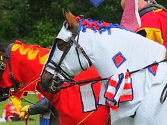 DSCF3709 (SierPinskiA) Tags: ruffordabbeycountrypark rufford knightsofnottingham fujixs1 jousting medieval horse knights goldeneagle falcon