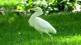White Bird - 5404
