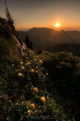 Sunset in Chartreuse, France (Ninouchon84) Tags: mountain flower sunset chartreuse canonfrance nisifilter isère trolles charmant som alpes alps rhônealpes france manfro manfrotto