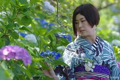 Kimono meets Hydrangea - 7 (HAMA-ANNEX) Tags: k3 hdpentaxdfa★70200mmf28eddcaw portrait