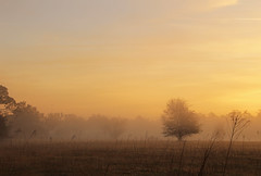 MistyMorningSunrise_SherriFeliccia_2.jpg (sherri_lynn) Tags: elements sunrise orange country landscape field silhouette trees orlando morning florida mist