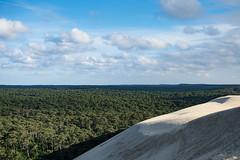 Entre terre et mer (Meculda) Tags: fôret tree forest vert green sable dune soleil sun france nikon lumière ombre ciel sky cloud extérieur nature naturel natural arbre