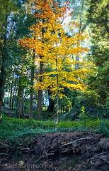 Tree (vmribeiro.net) Tags: cachada geo:lat=4155373070 geo:lon=837638587 geotagged portugal prt senhoradarocha braga senhora da rocha parque bom jesus sony a350 forest park tree animal sky grass wood road foliage trail field