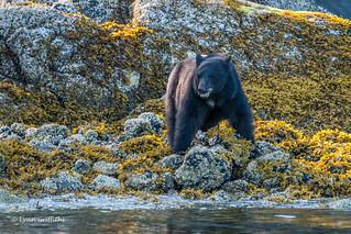 Black Bear 501_0767.jpg