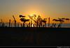Sunset, Labuan Bajo, Flores, Indonesia (JH_1982) Tags: beach strand tree trees sky island islands yellow orange red sun glow silhouette silhouettes pacific ocean water waves sunset ocaso sonnenuntergang coucherdesoleil pôrdosol tramonto закат zonsondergang zachódsłońca solnedgång solnedgang auringonlasku apus залез matahariterbenam mặttrờilặn 日落 日没cloud clouds cloudy wolken evening abend dusk labuan bajo labuanbajo ラブハンバジョ nusa tenggara flores 弗洛勒斯岛 フローレス島 플로레스섬 флорес indonesia indonesien indonésie 印度尼西亚 インドネシア 인도네시아 индонезия