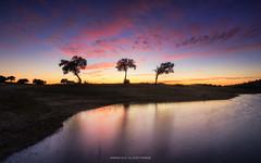 The three sisters (Henrique J.Silva) Tags: trees portugal santa susana landscape sunset clouds water lake dawn reflection sky sun horizon nature canon
