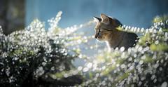 Mek (Katarina Drezga) Tags: cats cat catphotography petphotography pets nikond750 tamron70200vcg2 animals domesticcat feline