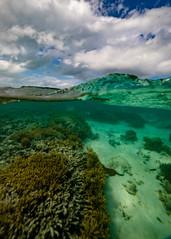 Snorkel Split (Quick Shot Photos) Tags: canon canoncollective heronisland queensland underwater snorkel bogie australia au