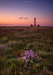 The Purple Flower (Matt Rimkus Photography) Tags: flower marshland westerhever lighthouse dawn schleswigholstein northsea tating deutschland de